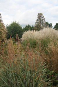 Kijktuinen Nunspeet Grassen