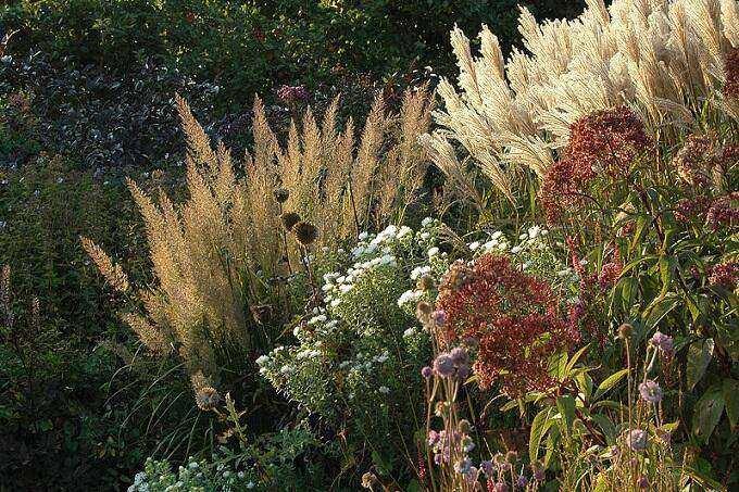 n goede Aarde herfst grassen