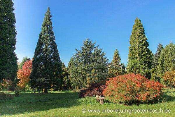 Arboretum Grootenbosch