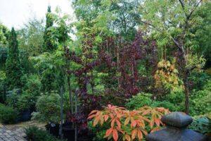 Arboretum Arcadie