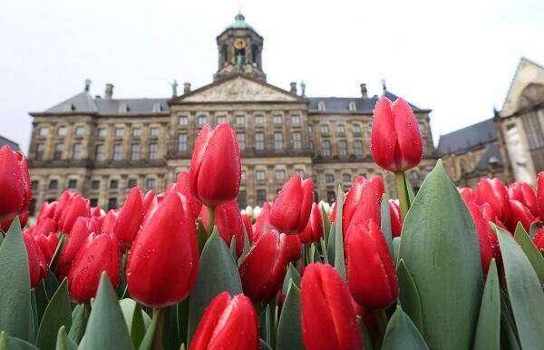 Tulpendag Amsterdam