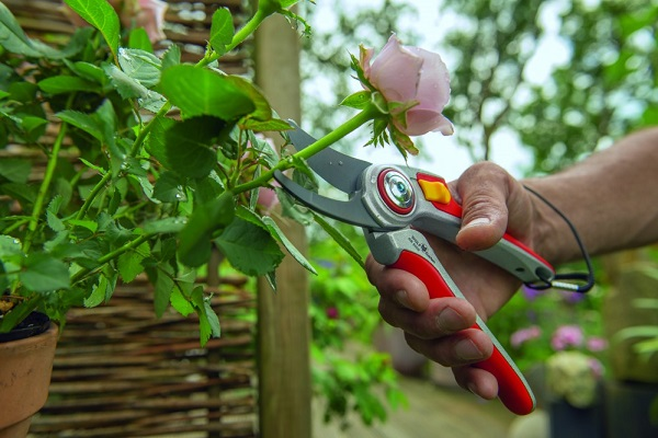 Workshop snoeien Tuinen van Appeltern