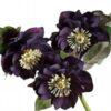 helleborus orientalis black petticoat