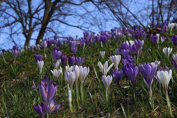 Stinzen Botanische Tuinen Utrecht