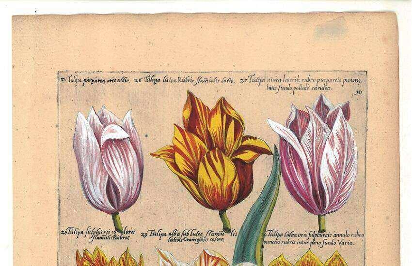 Bollencatalogus Emmanuel Sweerts Museum de Zwarte Tulp Lisse..