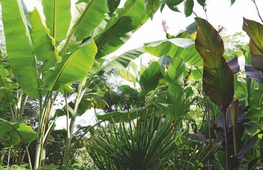 jungletuin tuingoed foltz