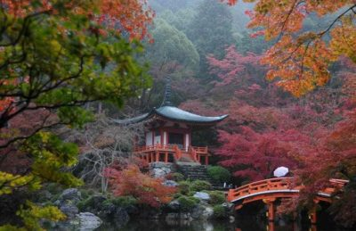 Japan Herfstkleuren Tuinreis Garden Tours