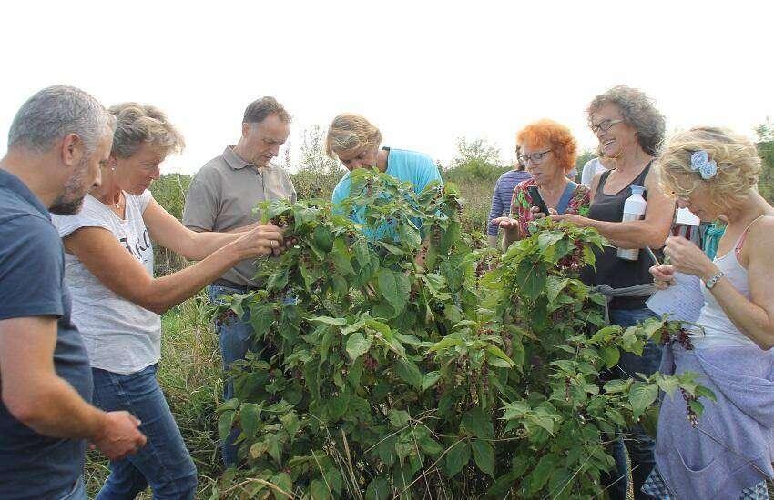 Bewondere blikken bij de mispelplanten in voedselbos Haarzuilens