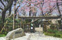 Makino Memorial Garden & Museum
