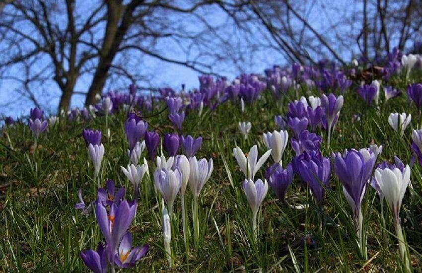 Stinzen-Botanische-Tuinen-Utrecht