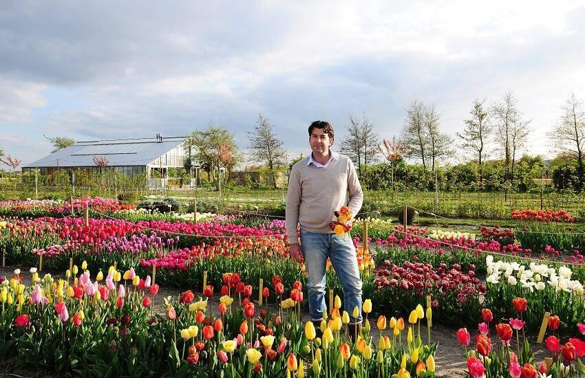 Tulip store tulpen showtuin