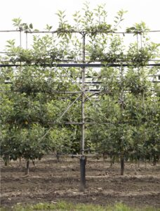 Vruchtappel leivorm Bomendael