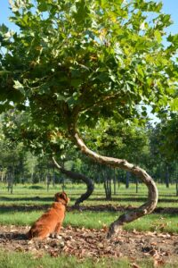 Swing Bomen van den Berk Boomkwekerij