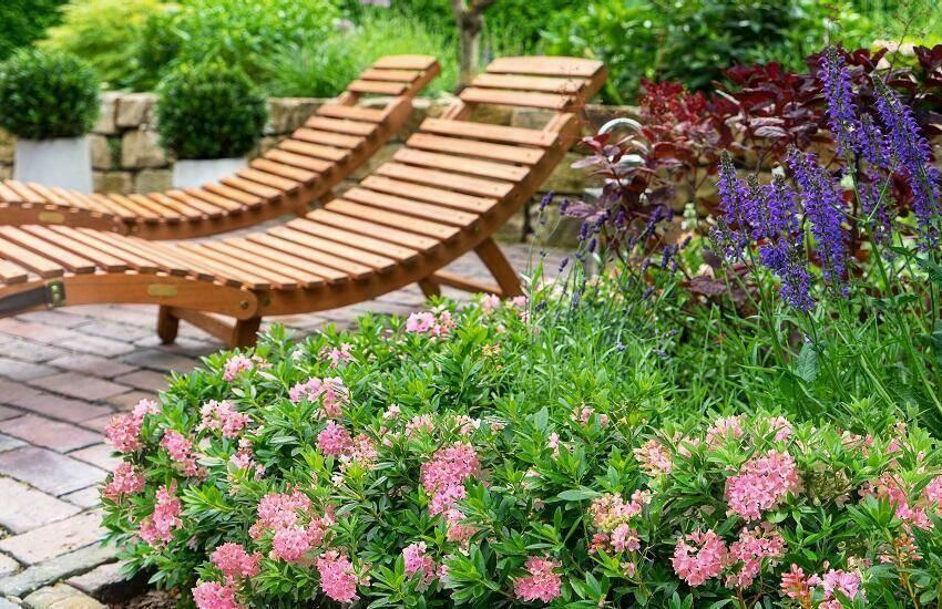 Bloombux een bijzondere dwergrhododendron