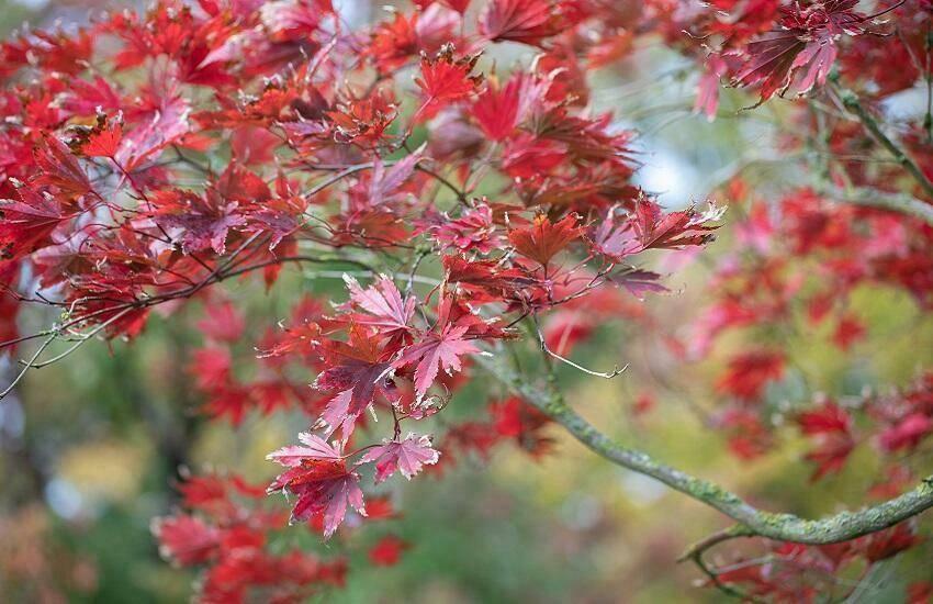 Herfst bij tuincentrum huiting vianen